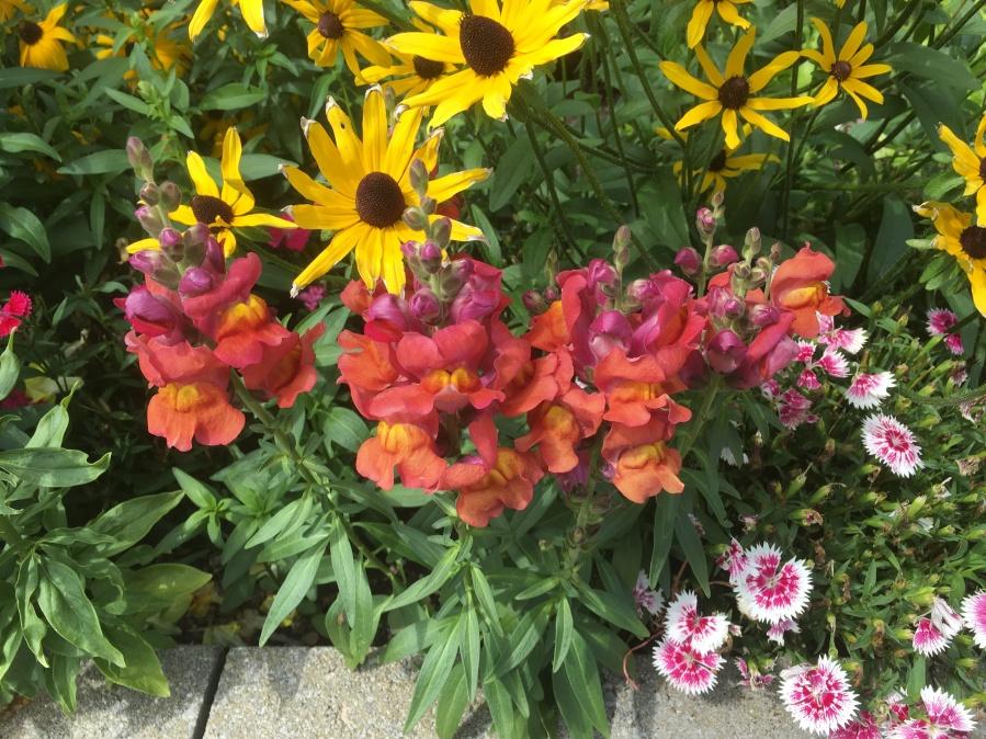 colourful flowers in garden