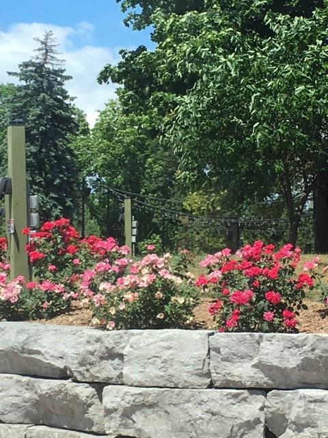 rose garden Toronto Zoo